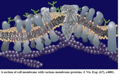 Membrane-picture-ESR6